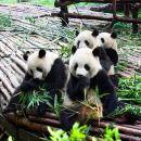 Chengdu-Xi'an Highlight tour by high speed train