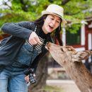 京都+嵐山+金閣寺+東大寺+奈良公園一日遊(京都世界遺產巡禮+奈良小鹿)