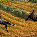 Waiheke Island Exploration and Zipline Day Tour from Auckland