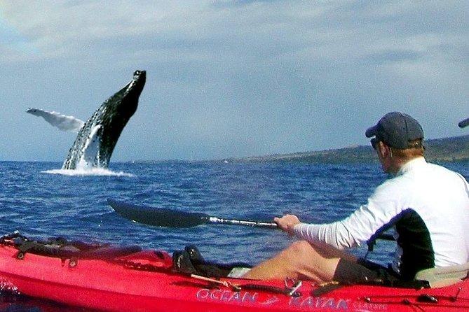 Kayak - Snorkel - Whale Watch