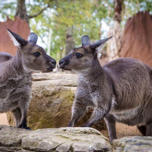 Adelaide Zoo Ticket
