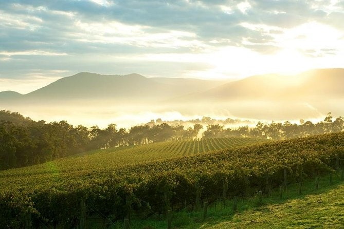 Private Yarra Valley Tour