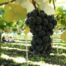 Private Full-Day Tour with Fruit Picking and Great Wall of China