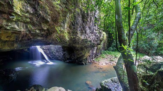Springbrook andTamborine Rainforest Tour Incl Natural Bridge and Glow Worm Cave