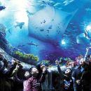 Special Offer丨Hong Kong Ocean Park Family Ticket