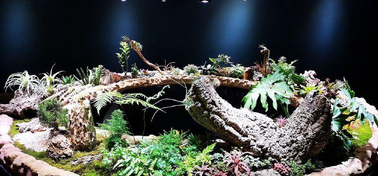 난궁 우저우 식물낙원3