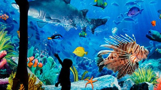 Sea Life Bangkok Ocean World Tickets