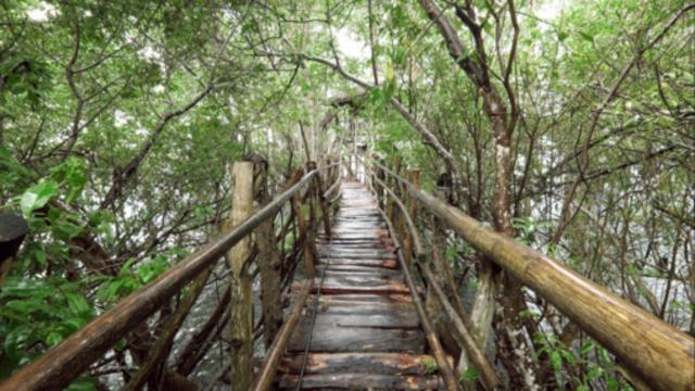 菲律賓錫基霍爾環島+山頂午餐一日遊(莎拉德旺跳崖+紅樹林樹屋(杜馬出發))