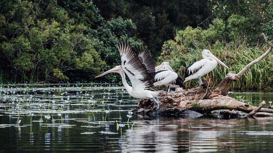 Everglades Eco Safari to Australia's Everglades