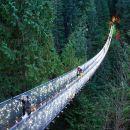 Vancouver City and Capilano Suspension Bridge Canyon Lights Tour