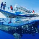 Dolphin and Whale Watching Private Tour in Pamilacan Island with Balicasag