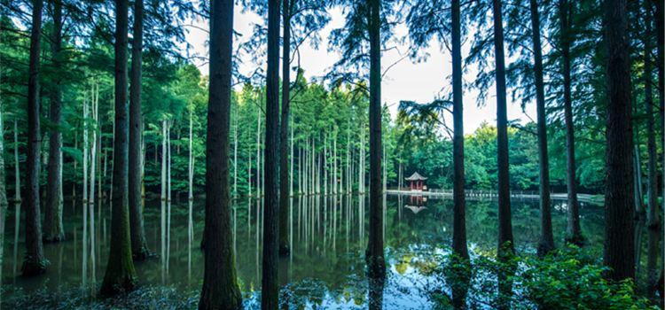 보얼덩산림공원1