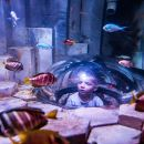 Skip the Line: SEA LIFE Melbourne Aquarium Admission Ticket