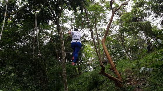 【花蓮戶外運動】野猴子|樹冠層探險|叢林飛躍
