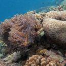 Half-Day Haitang Bay Snorkeling Trip From Sanya