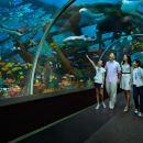 S.E.A. Aquarium VIP Tour