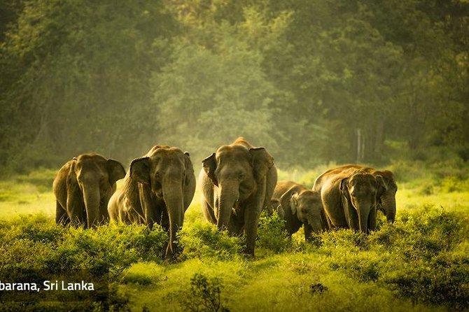 colombo to Sigiriya by car
