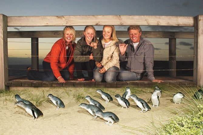 Phillip Island Nature Park Full-Day Tour from Melbourne