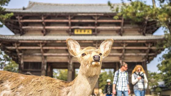 京都・奈良1日ツアー|伏見稲荷大社・嵐山・金閣寺・東大寺(大阪・京都出発)