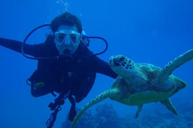 Full day Diving in Watamu