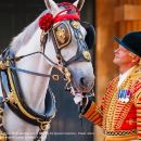 Royal Mews at Buckingham Palace and Changing the Guard
