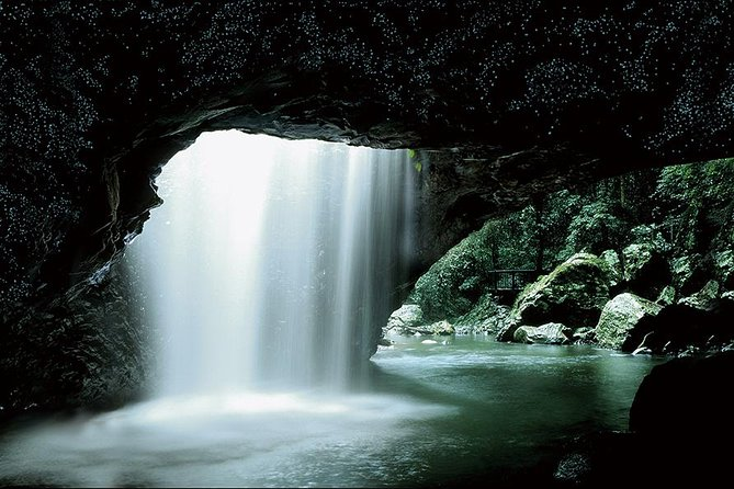 Glow Worm Cave and Natural Bridge Tour from Gold Coast