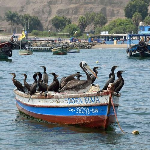 The Fishing Culture of Lima Tour