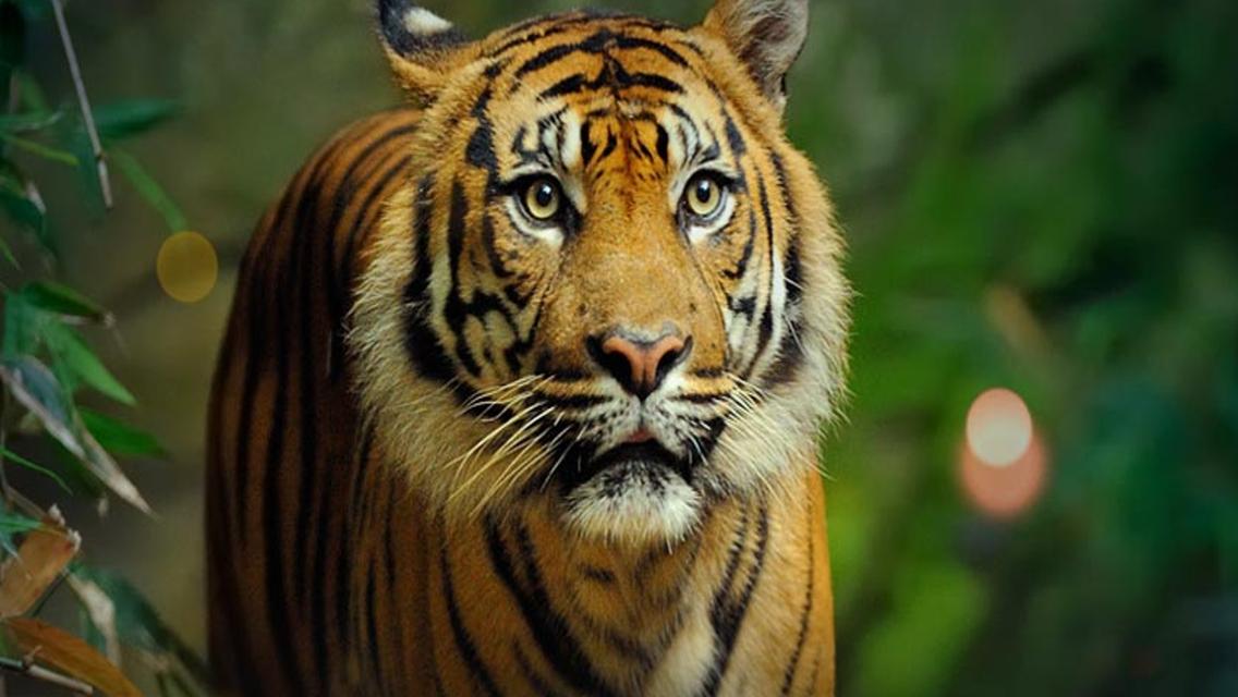 타롱가 동물원 입장권 & 스카이 사파리 케이블카