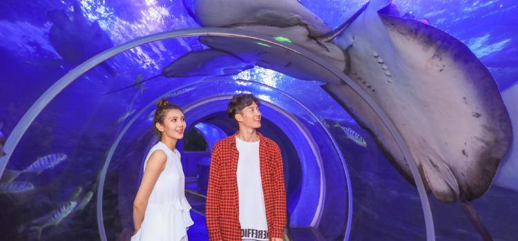 青島海底世界3