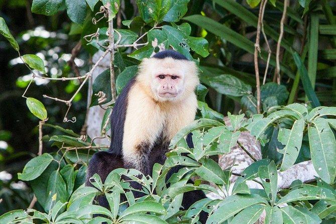 Soberania National Park, Monkey Island and Indian Village from Panama City