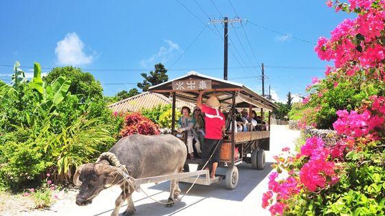1番人気!3島めぐりゴールデンコース 西表・由布・竹富 3島めぐり(昼食付)竹富島でグラスボード遊覧&水牛車観光