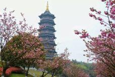重庆园博园-重庆