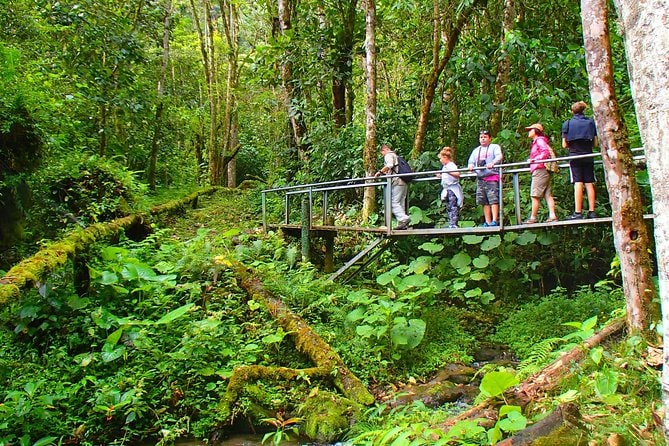 Cloud Forest Wildlife Hike 8:15am
