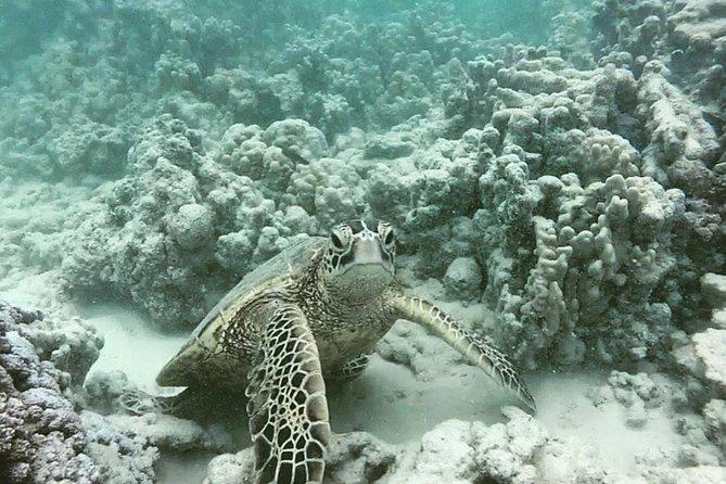 Honolulu Snorkeling Tour
