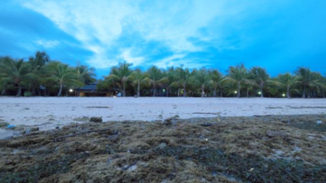 菲律賓錫基霍爾環島+山頂午餐一日遊(莎拉德旺跳崖+紅樹林(散拼/獨立團可選))