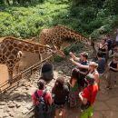 Half-Day David Sheldrick Elephant Orphanage, Giraffe Center, and Karen Blixen Museum Tour from Nairobi