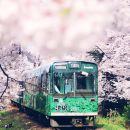 日本京都+嵐山+奈良公園+清水寺+金閣寺一日遊(特惠小火車票,下單前需確認庫存)