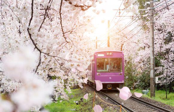 京都+嵐山+東大寺+奈良公園一日遊(體驗嵐山電車)