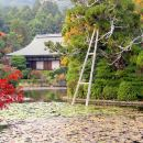 Expert Led Private Tour of Kyoto's Gardens and Landscapes