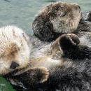 Skip the Line: Vancouver Aquarium Admission Ticket