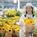 昆明石林+滇池+斗南花卉市場一日遊(8人小團+純玩一價全含+趣玩線路+送鮮花)