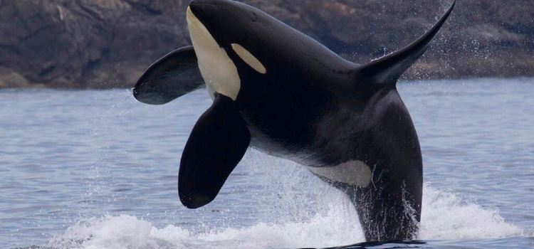 鯨魚觀賞2