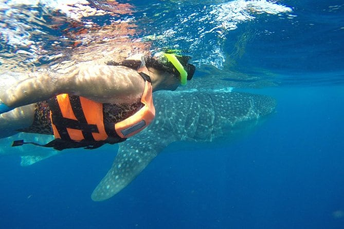 Private Tour: Whale Shark Adventure from Cancun and Riviera Maya