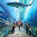Pattaya Underwater World Aquarium