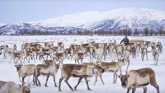 Reindeer visit, and Sami Culture Including Lunch from Tromso