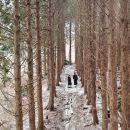 제주 브릭캠퍼스 & 향기가 있는 숲 이야기 일일 단독 차량 투어