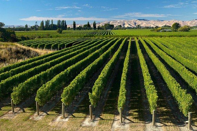 Half-Day Marlborough Wine Region Tour from Picton or Blenheim
