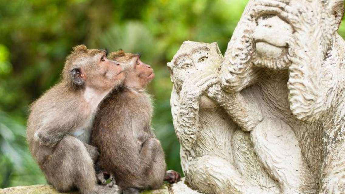 Bali Monkey Forest, Mengwi Temple, and Tanah Lot Afternoon Tour