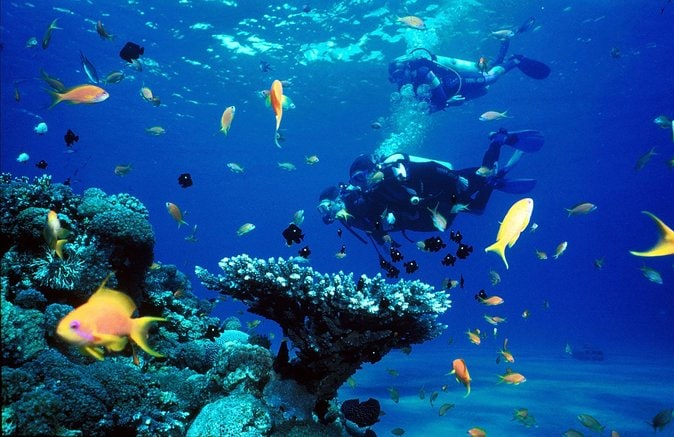 Full Day Diving Tour in the Mediterranean from Side with Lunch