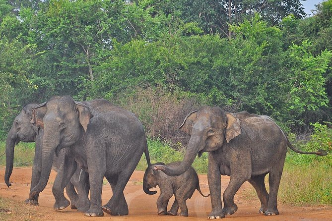 Udawalawe National Park Safari from Hikkaduwa (Private Day Tour)